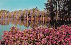 North Carolina Wilmington Greenfield Gardens Municipal Park
