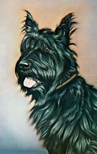 Dog -  President Franklin D. Roosevelt's Scottie Fala