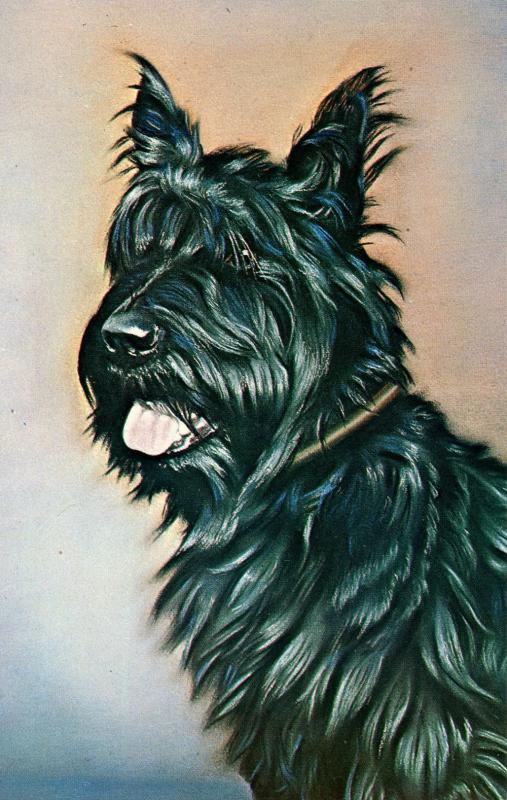 Dog -  President Franklin D. Roosevelt's Scottie Fala