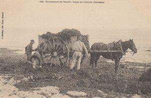 Ramasseurs de Varech. Types du Littoral (Calvados) , France , 00-10s
