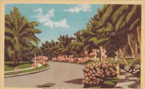 Florida Miami Beach Beautiful Rivo Alto Island Dexter Press