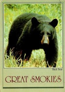 Smokie Mountains National Park Black Bear 1983