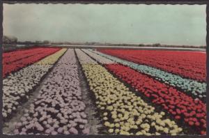 Field of Flowers Postcard