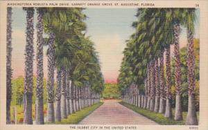 Florida Saint Augustine Washingtonia Robusta Palm Drive Garnett Orange The Ol...