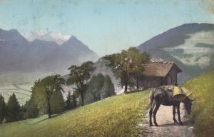 Switzerland, 1917 ; Donkey on Mountain Path