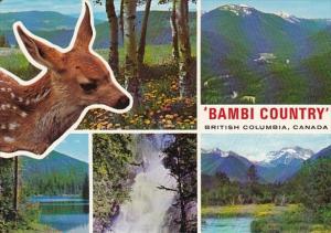 Canada British Columbia Bambi Deer Country Multi VIew