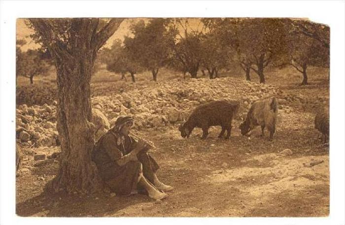 Arab shepherd boy , Palestine, 1910s