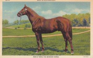 Race Horse MAN'O WAR , 30-40s