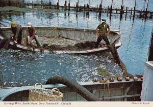 Herring Fishing at Weir New Brunswick Canadian Postcard