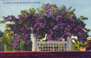 [ Linen ] US Florida St. Petersburg - Bougainvillea Plant