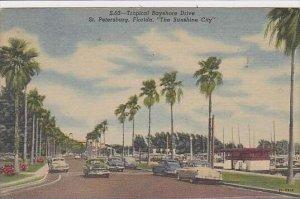 Florida St Petersburg Tropical BAyshore Drive The Sunshine City