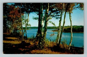 NC- North Carolina, Scenic View Through the Trees, Chrome c1959Postcard