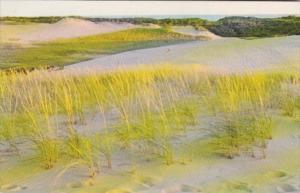 Massachusetts View Of Sand Dunes Cape Cod National Seashore 1968