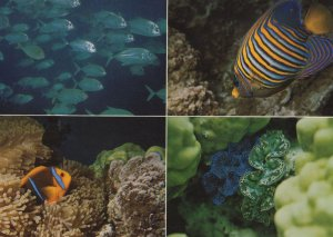 Tahiti Big Eyed Jack Fish Clown Fishes Angel Postcard s