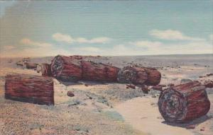 Drift Logs In Second Forest Petrifeid Forest Arizona