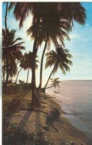 Puerto Rico, Tropical Scene in Beautiful Puerto Rico 1964...