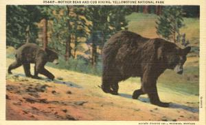 Mother Bear and Cub Hiking - Yellowstone National Park WY, Wyoming - Linen