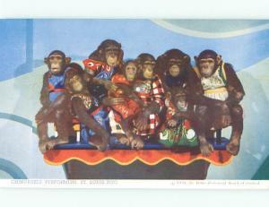 St Louis Zoological Gardens Zoo Animals 1950's Chimpanzies Postcard # 8449