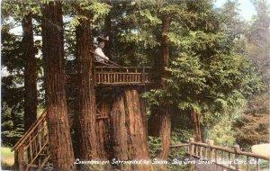 Santa Cruz California Postcard 1910 Big Tree Grove Tree House Woman MQ