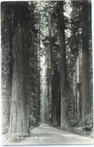 RP Redwood Highway California CA by Laws #911