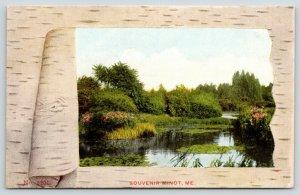 Minot Maine~Birch Bark Peel Back~Lily Pond~c1910 Souvenir Postcard