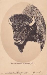 New York Buffalo An Old Resident Of Buffalo 1907