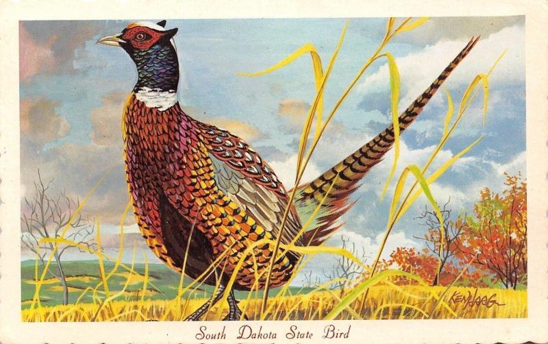 south dakota state birdchinese ringneck pheasant1966 ken haag artist signed