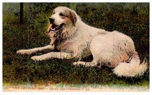 Dog , Pyrenees