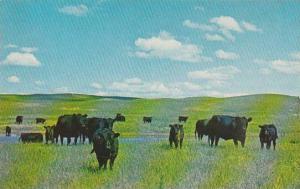 Nebraska North Platte Greetings From Nebraska