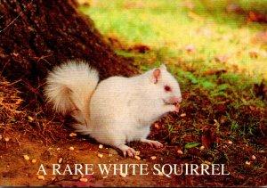Illinois Olney Rare White Squirrel