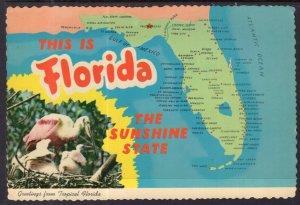 Greetings From Florida Map Florida BIN