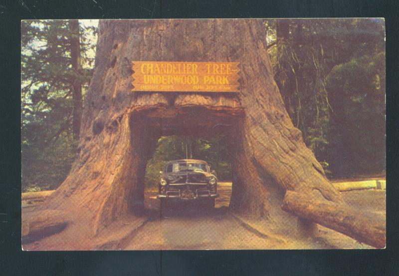 REDWOOD HIGHWAY CALIFORNIA CHANDELIER DRIVE THRU TREE OLD CAR CARS POSTCARD