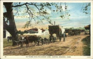 Rosario Cub Ox Teams Sugar Cane c1920 Postcard