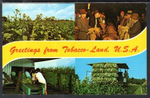 Greetings From Tobacco Land USA