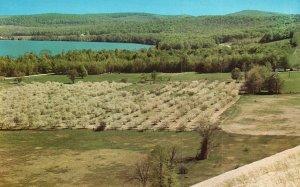Vintage Postcard Cherry Blossoms Grand Traverse Region Sleeping Bear Dune Mich.