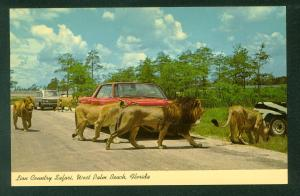 Lion Country Safari West Palm Beach Florida FL Vintage Postcard