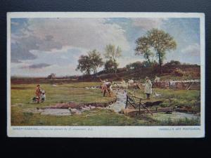 Farm & Country Life SHEEP WASHING in Steam - Old Postcard by Cassell