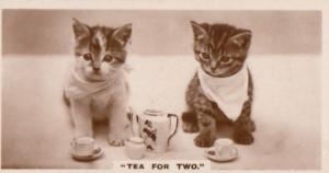 Tea Party For Two Cat German Old Real Photo Cats Cigarette Card