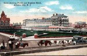 New Jersey Atlantic City Scene Showing Ponies and Brighton Hotel 1916