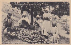 Jamaica Native Women Pulping Cocoa