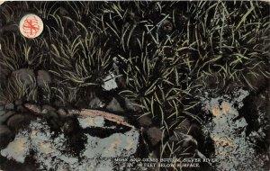LPA56 Silver Springs Florida Silver River Moss Grass Bottom Postcard