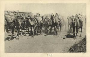 turkey, ADANA, Group of Camels (1910s)