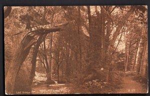 4520) California YOSEMITE VALLEY Lost Arrow Trail - pm1911 - Divided Back