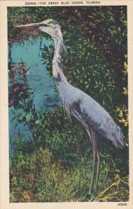 The Great Blue Heron Florida