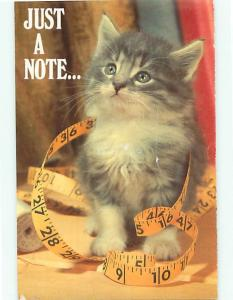 Just a Note Kitten Cat North Shore Animal League  Postcard # 7860