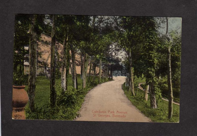 Bermuda Caledonia Park Ave St Georges Postcard Dirt Road Lane Ave 1911