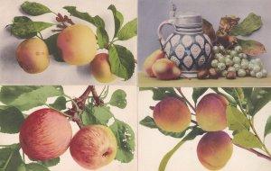 Apple Peach 4x Rare Fruit 1906 Education Committee Antique Postcard s