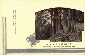 CPA The wonderful cedar-tree, Shichihonsugi, Nara JAPAN (725060)
