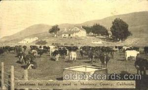 Monteray County, California, USADairy, Cow Cows, Postcard Post Card