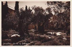 RP: Jerusalem - Garden of Gethsemane , Israel, 10-30s